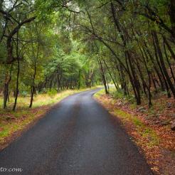 Bob Miller | Coconino National Forest