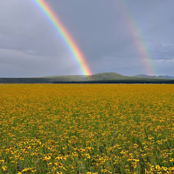 Doug Koepsel | Mormon Lake