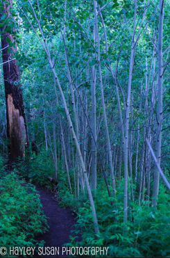 Hayley Susan Photography | Aspen Look Trail
