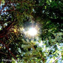 Helen Aguiniga-Grove | Coconino National Forest