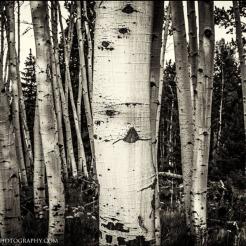 James Thomas Dudrow Photography | Hart Prairie