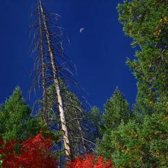 Jim Peterson | Oak Creek Canyon