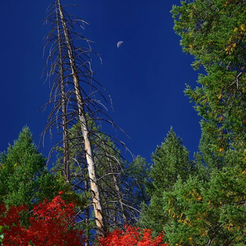 Jim Peterson   Oak Creek Canyon
