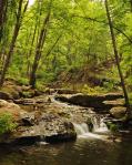 Jody M. Tanner | Horton Creek