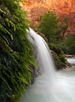 Michele Morris Sons | Havasu Canyon