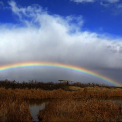 Pam Barnhart | Roper Lake State Park