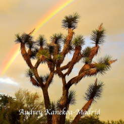 Rainshadow Images | Desert Museum