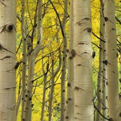 Timm Chapman | Kachina Wilderness