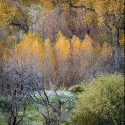 Valerie Millett | Cave Creek