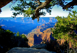 Beth Winfrey | Grand Canyon