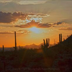 Dancing Snake Nature Photography | Arizona Sonora Desert Museum