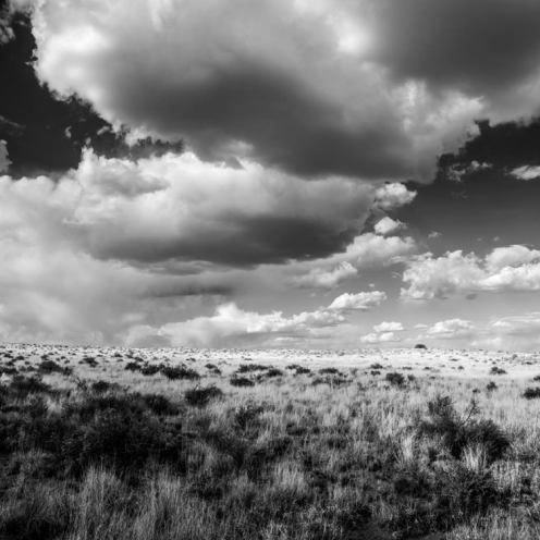 James Thomas Dudrow Photography | Petrified Forest