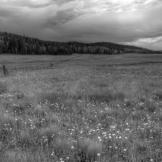Jason Branch | Near Alpine