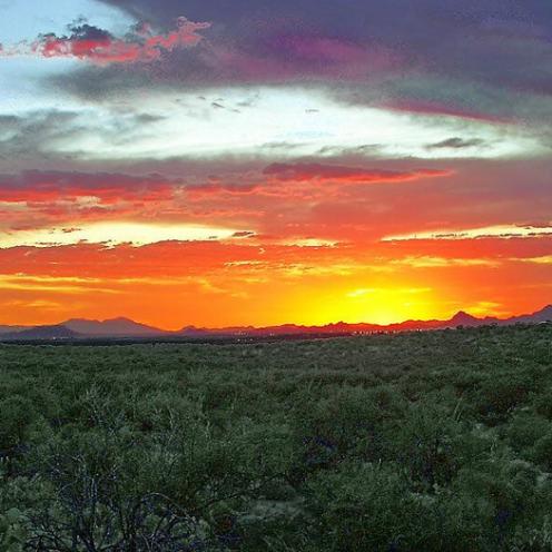 Lee Daniels   Saguaro National Park East