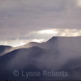 Lynne Roberts | Cottonwood