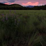Pam Barnhart | Flagstaff