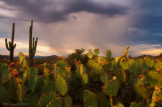 Peter James Nature Photography | Lost Dutchman State Park