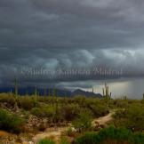 Rainshadow Images | Tucson