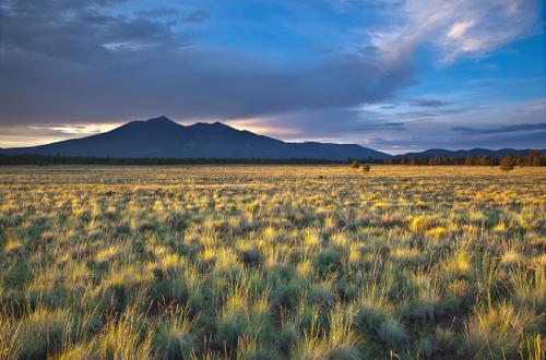 Tom Bean grasslands Aug 13