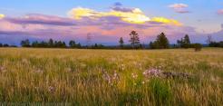 Sinyala Gal| Flagstaff