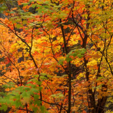 Bob Miller | West Fork Trail