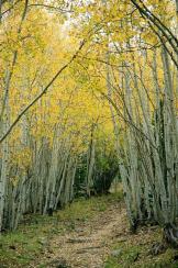 Jacque Alameddine | Escudilla Trail