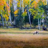 Ken Sanger | Hart Prairie