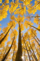 Peter James Nature Photography | Flagstaff