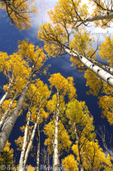 Photography by Saija | Flagstaff