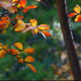 Tam Ryan | Boyce Thompson Arboretum