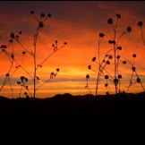 Debbie Filleman Detherage | Bassett Peak