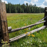 Focus On Nature Photography | Hannagan Meadow