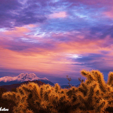 Misty Photos | Apache Junction