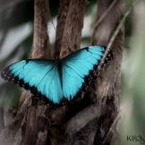Sandy Klewicki | Scottsdale