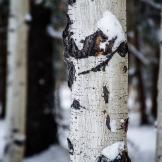 Ken Sanger | Snow Bowl