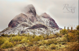 Patty Urlaub | Vulture Peak