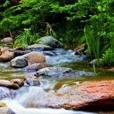 Stacey Johnson | Wet Beaver Creek