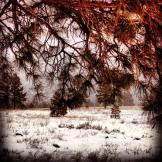 Ashlie Polder | Flagstaff