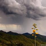 Chris Couture | Pinal Mountains