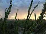 Cristinita Luna | Tucson