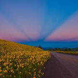 Kathleen Wasselle Croft | Sunset Crater