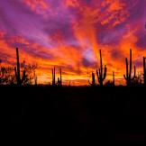 Sean Parker Photography   Tucson