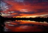 Tam Ryan | Gilbert Riparian Preserve