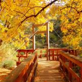 Ann Smith | Boyce Thompson Arboretum