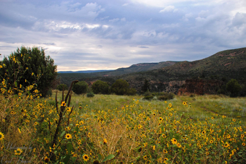 Carol Hagood | Salt River Canyon