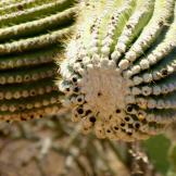 Diane Ingram | Tucson