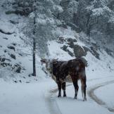 Jenn Walker   Pinal Mountains