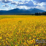 Perci Grass Tacheney | Flagstaff