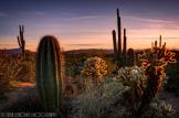 Saija Lehtonen | Sonoran Desert