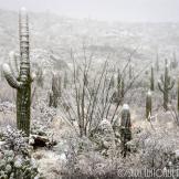 Saija Lehtonen   Tucson